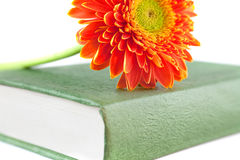 Flower book. Flower and book on white Stock Images