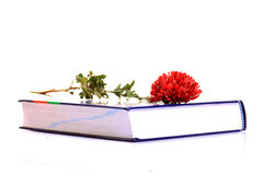 Flower and book Royalty Free Stock Photography