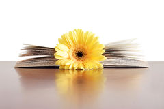 Flower Book Stock Photo