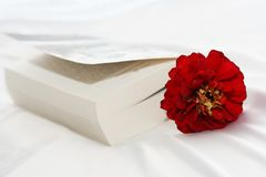 Flower in the book royalty free stock photography
