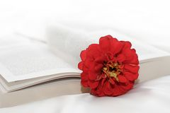 Flower in the book Royalty Free Stock Photo
