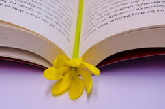 flower bookmark Stock Photo