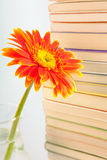 Flower on books background. A blooming flower on books background Stock Image