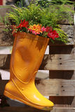 Flower in boot Stock Photos