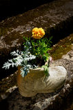 Flower in boot shaped pot Stock Images