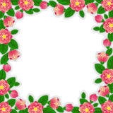 Flower border. Spring blossom border with white background Royalty Free Stock Images