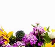 Flower border. Many different colored flowers make up isolated flower border royalty free stock image