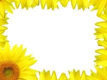 Flower border. Sunflower Border Stock Photos