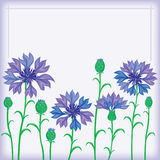 Flower border of cornflowers Royalty Free Stock Photos