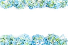 Flower border frame of blue hydrangea flowers on white background. Flat lay, top view. Floral background. Flower border frame of blue hydrangea flowers on white royalty free stock image