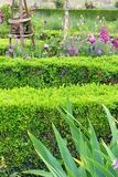 Flower border French style, Tuileries Garden. A photograph showing some beautiful gardens flowering plants border in purple and green theme, located in the Stock Photos