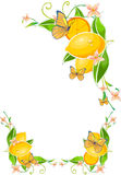 Flower Border with Lemon. And Butterflies in white background Stock Photography