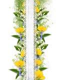 Flower Border On The White Background Stock Photo