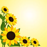Flower border with Sunflowers Stock Photography