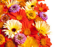 Flower Border, White Background Royalty Free Stock Images