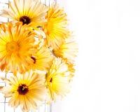 Flower Border, White Background Stock Photos
