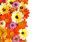 Flower Border, White Background Royalty Free Stock Image