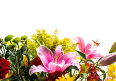 Flower border. With white copy space Royalty Free Stock Images