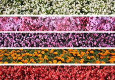 Flower borders Royalty Free Stock Images