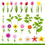 Flower Borders - 8 Stock Image