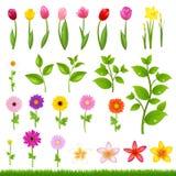 Flower Borders - 8 Stock Image