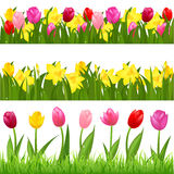 Flower Borders. Vector. 3 Flower Borders From Tulips And Narcissuses, Isolated On White Background, Vector Illustration Stock Image