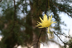 Flower in a bottle. Single flower hangin from a string as a wedding day decoration stock images