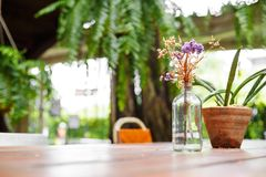 Flower in bottle jar and little tree in flowerpot and they are on the the wood table in coffee shop. stock photo