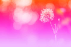 Grass flower background, colorful Stock Image