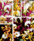 Flower bouquet. Of calla lily and orchid collage Royalty Free Stock Photo