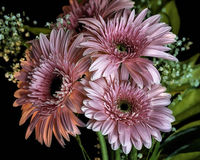 Flower Bouquet. A bouquet of pink flowers Royalty Free Stock Photos