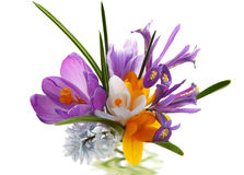 Flower Bouquet. Colorful flower bunch isolated on white background Royalty Free Stock Photography