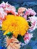 Flower bouquet. Autumn flower bouquet with sunflower royalty free stock photos