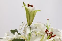 Flower bouquet background. Lily. Royalty Free Stock Image