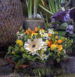 Flower bouquet Barberton daisy, Gerbera jamesonii Stock Image