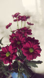 Flower bouquet. Beautiful flowers bunch pink magenta green Stock Photography