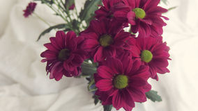 Flower bouquet. Beautiful flowers bunch pink magenta green Royalty Free Stock Photography