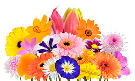 Flower Bouquet Collection of Various Colorful Flowers Isolated Royalty Free Stock Photos