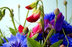 Flower bouquet. With cornflower and sweetpea Royalty Free Stock Photo