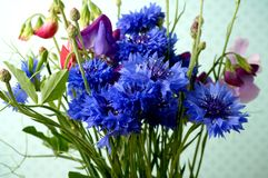 Flower bouquet. With cornflower and sweetpea Royalty Free Stock Image