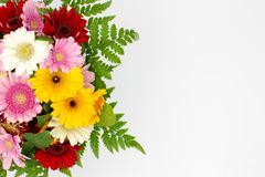 Flower bouquet of daisies space for text white background stock images