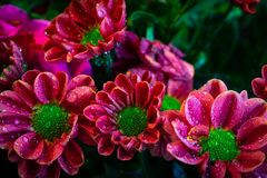 Flower bouquet decoration. Close up macro stock image
