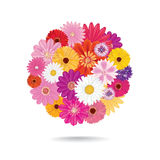 Flower bouquet. Floral posy isolated on white background. Abstract circle with flowers. Floral posy background Stock Photos