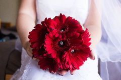 A flower bouquet in hands. A red gerber daisy bouquet in the hands and lap of a bride sitting in a white dress Stock Photos