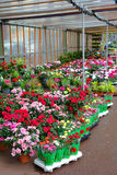 Flower and Bouquet Market in Small Town in France Royalty Free Stock Photography