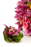 Flower bouquet with orchids Stock Photography