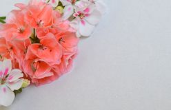 Flower, bouquet, pink, flowers, isolated, vase, white, floral, nature, blossom, rose, bunch, spring, petal, beauty, plant, red, bl royalty free stock photo