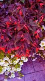 flower bouquet with purple shades and other colors royalty free stock images