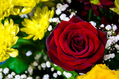 Flower. Bouquet with red rose Royalty Free Stock Photography