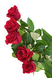 Flower Bouquet from Red Roses  on White Background. Closeup Royalty Free Stock Image